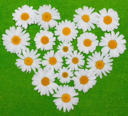 Flowerses of the camomile are put by figure in form heart on green background photo