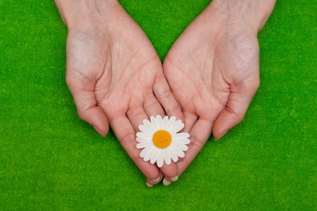 �amomile in feminine hand on green background Stock Photo - 5245018