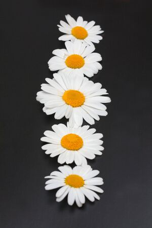 daisywheel: Flowers of the daisywheel not black background put inline