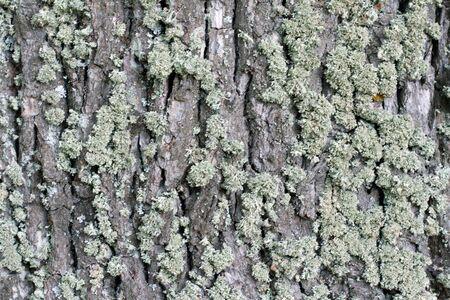 cortex: Green moss on cortex tree, texture background