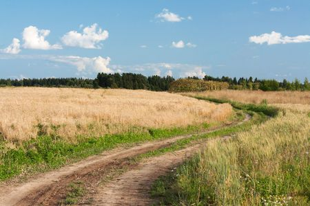 Landscape road in field of the wheat on background sky with cloud photo