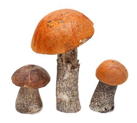 funghi: Tre funghi stanno isolati su sfondo bianco