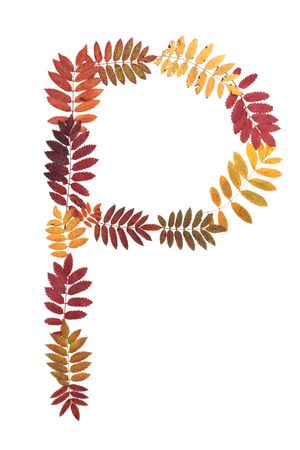 rowanberry: Letter P from alphabet from autumn sheet of rowanberry