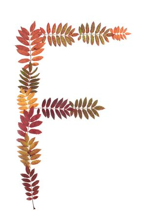 rowanberry: Letter F from alphabet from autumn sheet of rowanberry Stock Photo