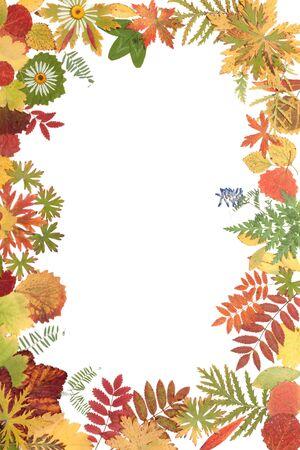 Frame on white background from autumn sheet photo