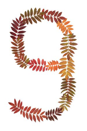 Numeral nine 9 put from autumn sheet on white background photo
