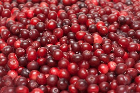 Much red ripe cranberries put by background Stock Photo