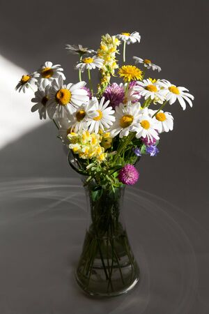 Still life bouquet daisywheel in vase with water in light from window photo