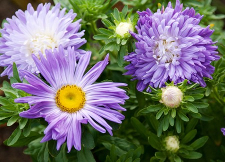 Violet flowerses on background of the green herb photo