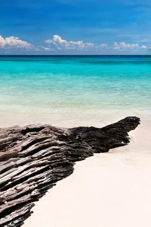snag: textured snag on the beach Andaman Sea