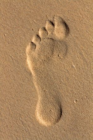 footprint on the sea-sand at sunset sunshine photo