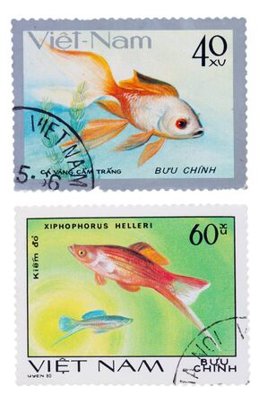 VIETNAM - CIRCA 1980: A stamp printed in USSR, shows ca vang cam trang, circa 1980 VIETNAM - CIRCA 1980: A stamp printed in USSR, shows xiphophorus helleri, circa 1980 photo
