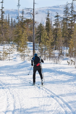 Cross-country skiing: man cross-country skiing on a sunny winter day in forest photo