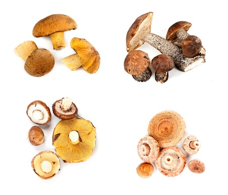 Different fungi decomposed into four piles on a white background photo