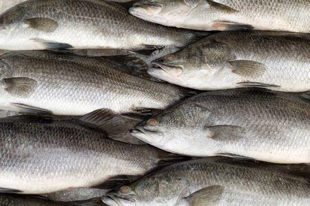 white perch: Silver perc White perch fish fresh in the market Stock Photo