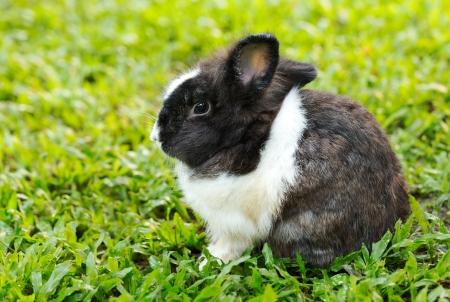 piebald: Peque�o conejo picazo sentado en la hierba verde Foto de archivo
