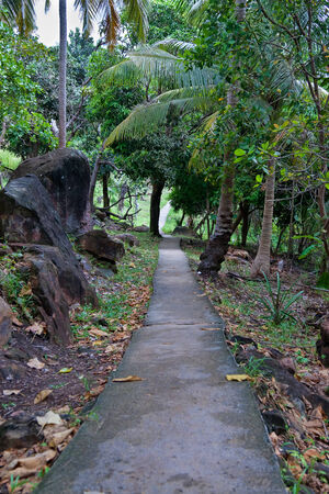 wilds: paved footpath in the jungles of palms