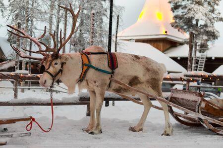 Kerst rendieren in het dorp Santa Claus. Finland. Rovaniemi.