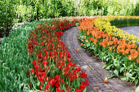 keukenhof: Flowers tulips in Keukenhof park, Lisse. Netherlands. Stock Photo