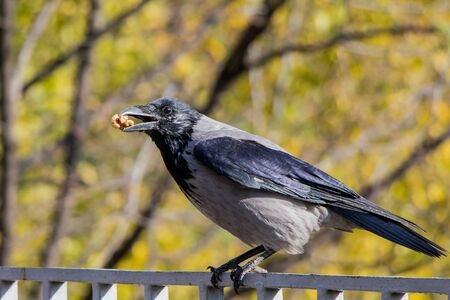 a bird of crows eating nuts in the forest