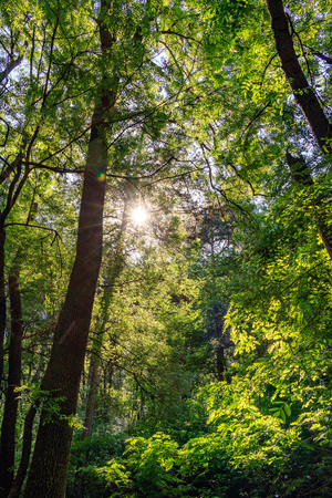 the Sun in the morning forest