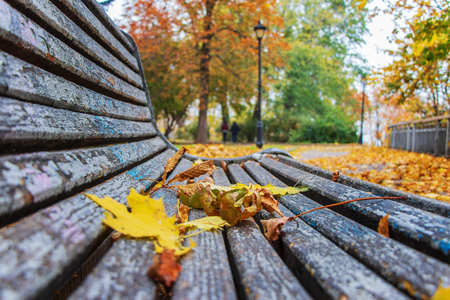 autumn landscape in a city park yellow leaves on a bench for relaxing on a background of green trees Stock Photo