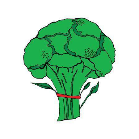 Broccoli in vector