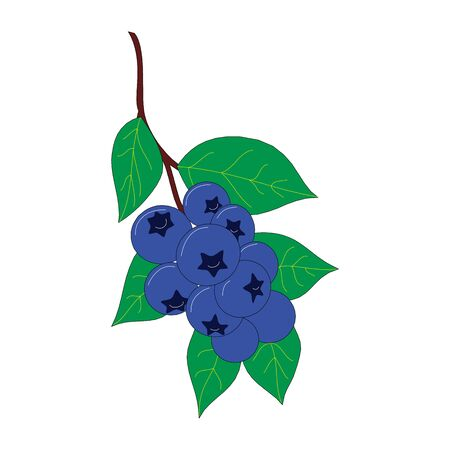 Hand drawn blueberry on white background. Vector illustration of berries Çizim