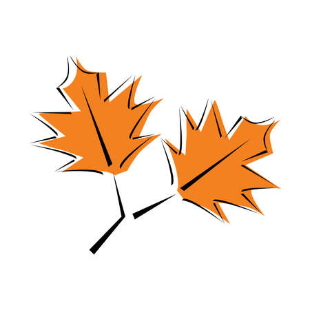 Autumn leaf. Autumn maple leaf isolated on a white background.