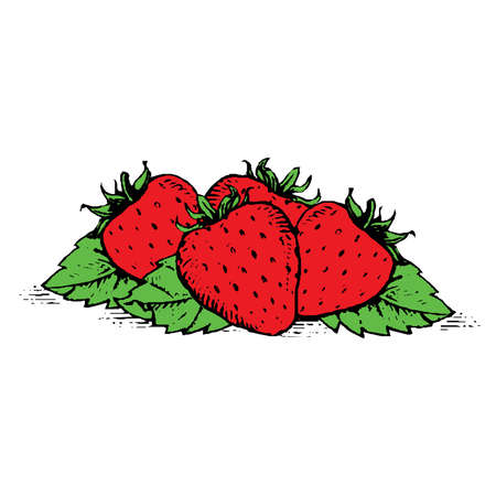 Strawberry isolated on white background, vector illustration. Illustration