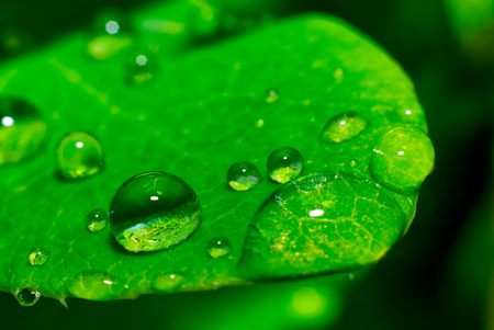 green wet leaf with droplets Stock fotó