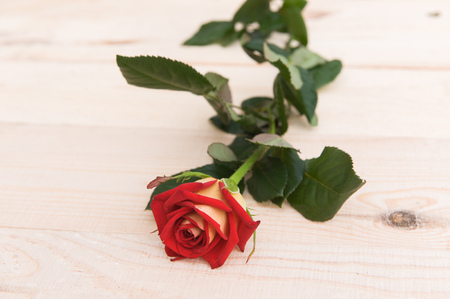 once person: one red rose on the wooden table. Stock Photo