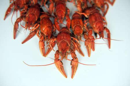 fluvial: cooked Crayfish on a white background. Crayfish isolated on white Stock Photo