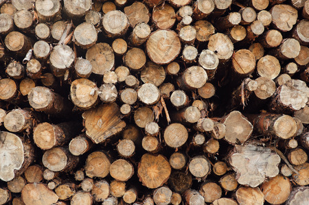 pile of logs: pine logs stacked in a pile on a green grass Stock Photo