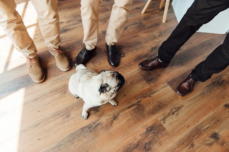 expressive face: Pug on a wooden floor with an expressive face looking at the camera .