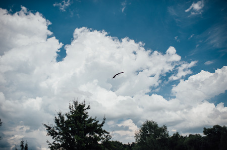 webfoot: beautiful sea gull flying in a blue sky.