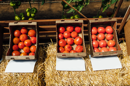 Tasty tomatoes in cardboard boxes on market, closeup. Under each box is a sheet for writing the name of the variety of vegetables. copy space Stock Photo
