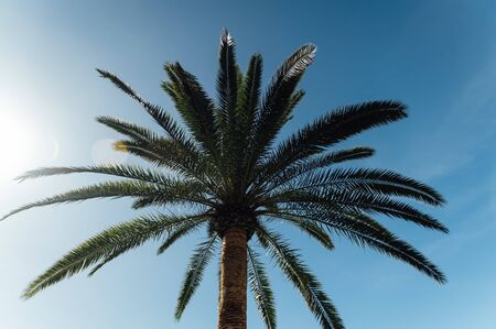 Tropical palm tree leaves sway in a gentle breeze against blue sky