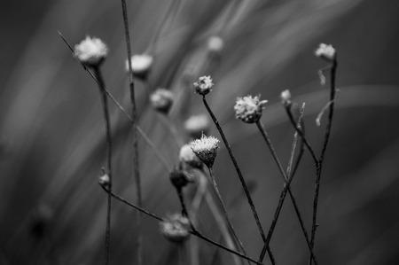 delicate: delicate flowers Stock Photo