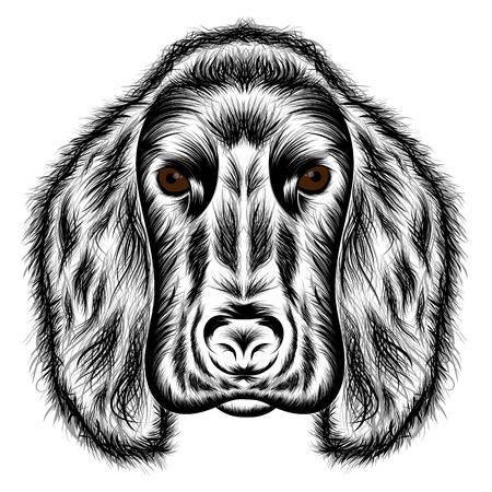 cocker: Cocker Spaniel. Vector silhouette of a dogs head