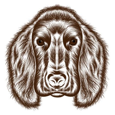 Cocker Spaniel. Vector silhouette of a dogs head