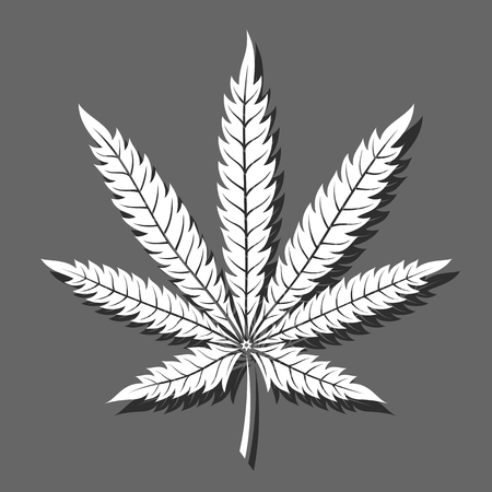 Vector leaf of marijuana casting a gray shadow