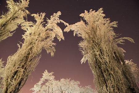 frozen trees: frozen trees winter night stars cold ice Stock Photo