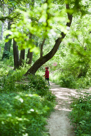 butterfly net: girl with  a butterfly net in woods Stock Photo