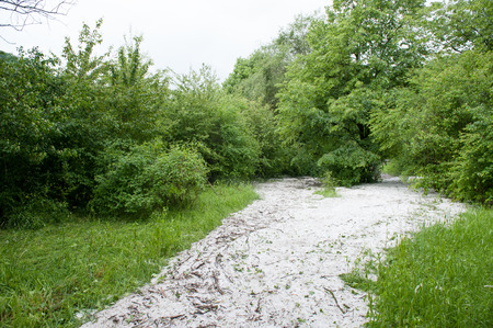 hail: hail flows are among the trees in summer Stock Photo