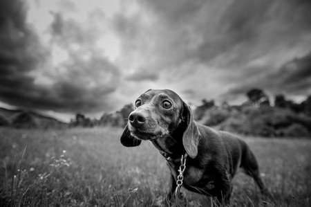 purebred dog for a walk in the park looking at the camera Foto de archivo