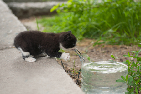 beautiful kitten stretches to a container with water clutching a rope