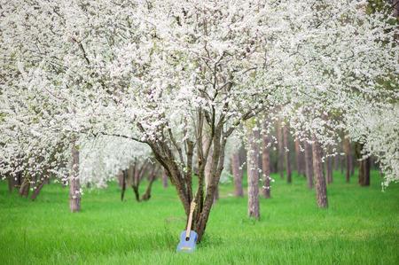 vintage denim guitar standing near flowering spring tree in outdoor beautiful park