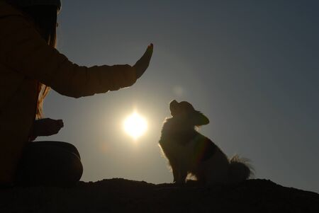 canine obedience concept of young dog trainer with hand gesture and little chihuahua dog sitting on sunset