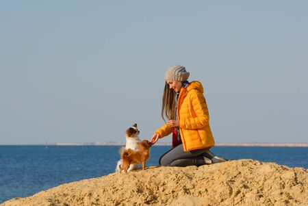 animal dog trainer young happy woman feed her little chihuahua dogs sitting on sand beach on autumn sunset